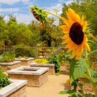 springs-preserve-gardens-and-arboretum-in-nv