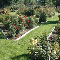 reno-municipal-rose-garden-in-nv